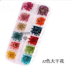 Набор сухоцветов в контейнере для декора ногтей.(цветы)
